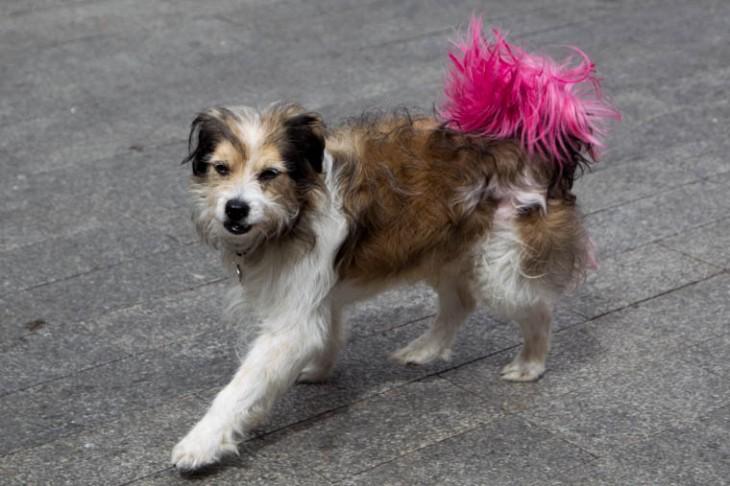 Perro con rabo rosa.