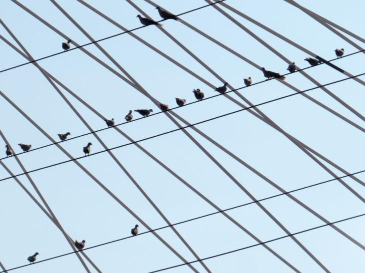 Los pájaros y la vida contemplativa