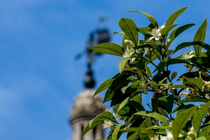 El azahar, Sevilla y su cielo