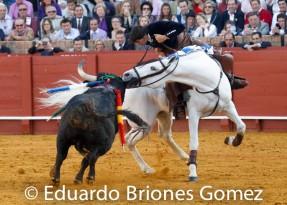 toro y caballo 05
